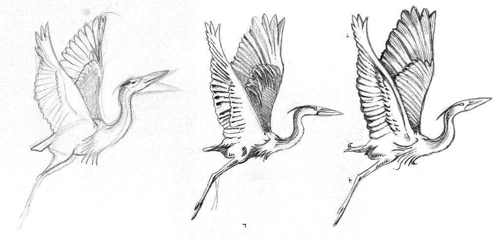 heron-drawings