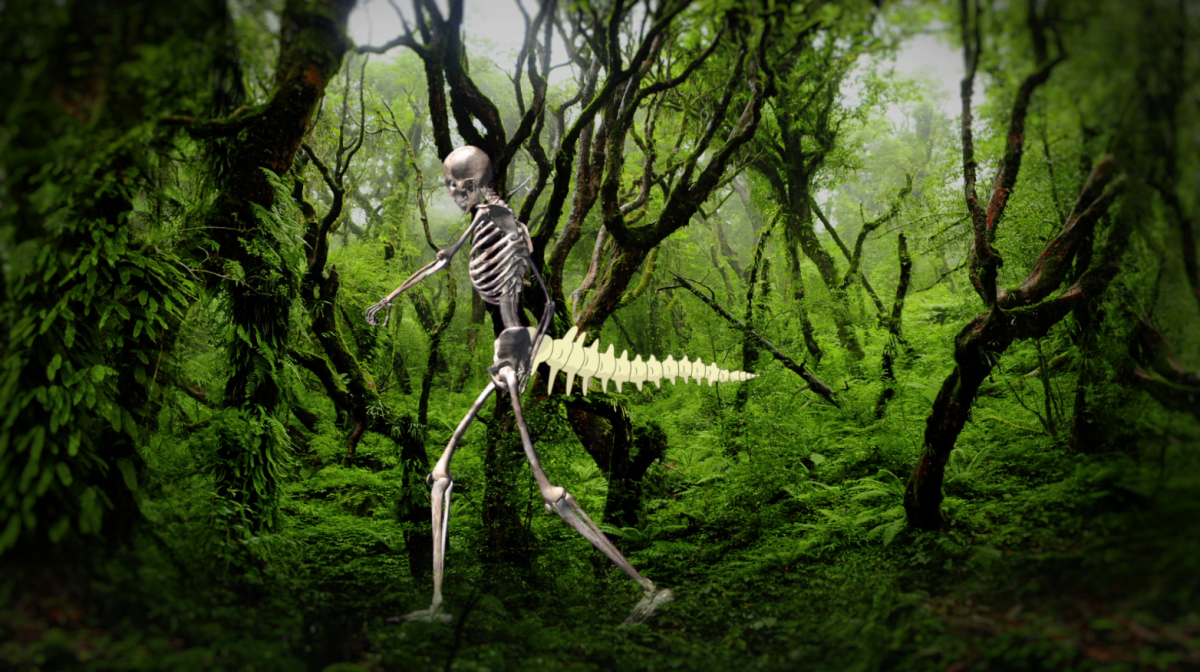 skeleton tail